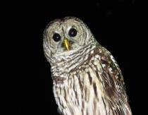 owl at astor park