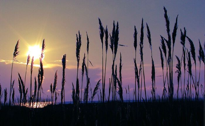 Seabreeze Sunrise