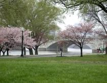 Rainy Spring Day in DC