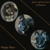 Puppy Days Collage