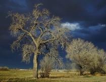 Cottonwood Storm #2
