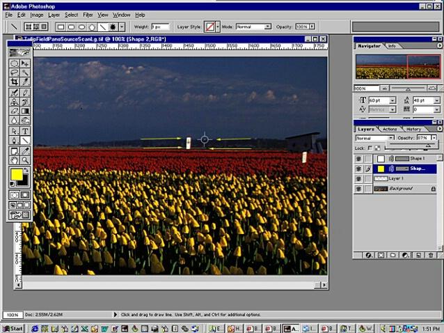 Tulip Pano - Screen 2