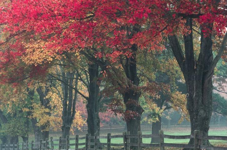 Benson road trees