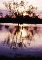 Treeflections