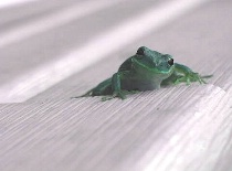 Just a Little Froggy