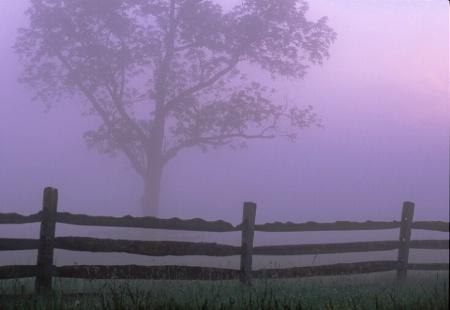 Tree_fenceline.tif