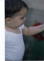 picking roses
