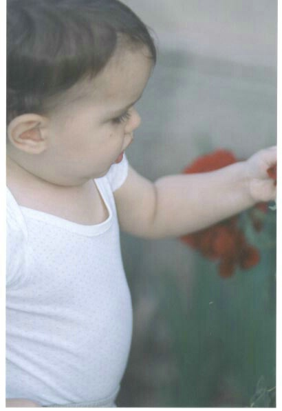 picking roses again