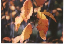 autumn leaves detail