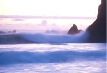 Lavendar Waves