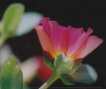 Picture of flowers cropped
