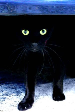 Gooly my black cat