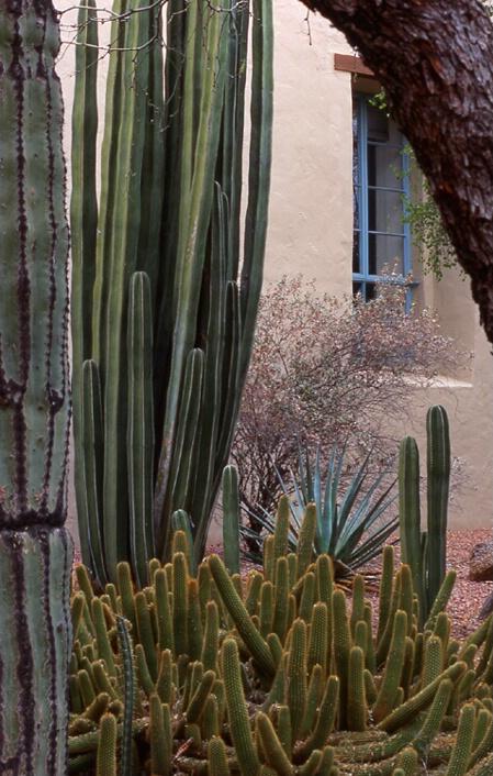 Arizona morning (-1)