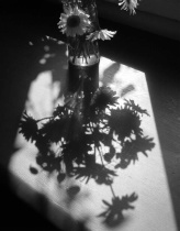 bouquet shadows
