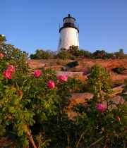 Lighthouse Roses
