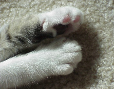 Paws of Innocence
