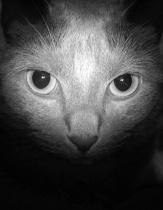 Bob's Eyes