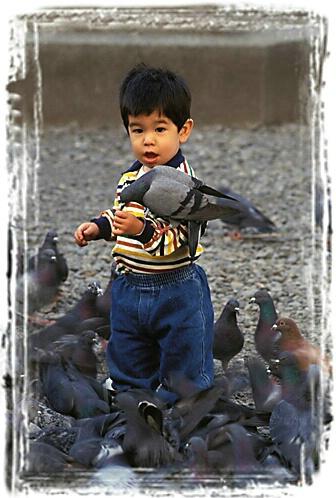 CJ Feeding the Pigeons