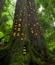 Tree Hotel #2