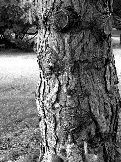 The Face in the Tree Trunk