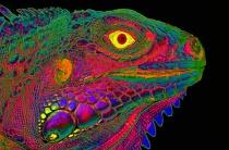 Iguana Fantasy