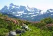 Mt Shuksan and Fl...