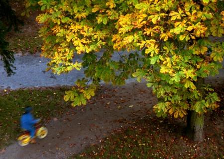 Autumn biker
