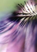 Purple Passion II