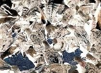 Piazza Pigeons