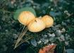 3 Little Mushroom...