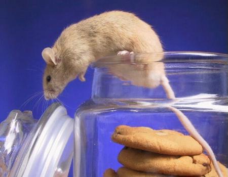 Caught n the Cookie Jar