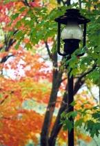 Autumn Lamp Post