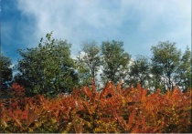 Autumn in Beijing 2