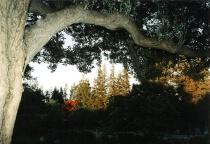 Flaming Tree  (-1 exposure)