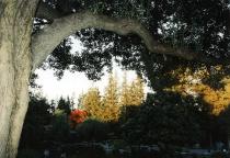 Flaming Tree  (correct exposure)