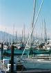 Sea of Sailboats