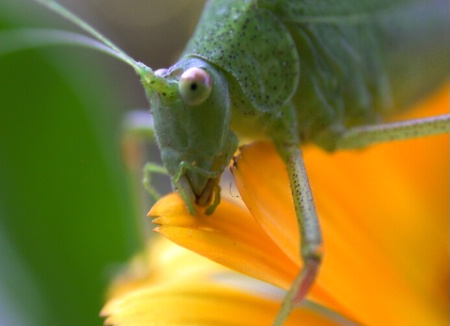 Flower Hopper