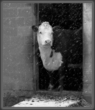 Ice Cold Milk
