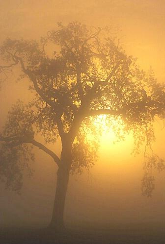 Hidden Valley Sunrise