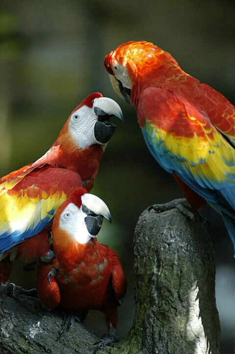Macaw conference