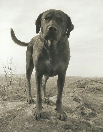 mountain dog revisited