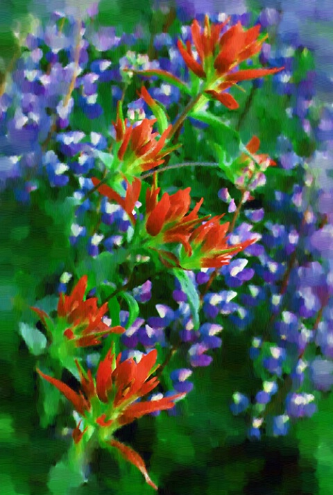 Lupine with Indian Paintbrush