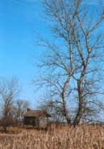 Goose Lake Tree