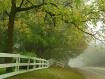 Down a Foggy Road