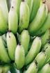 Banana bunch - ve...
