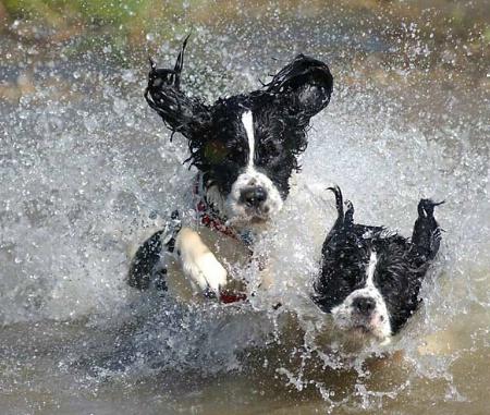 Splish & Splash