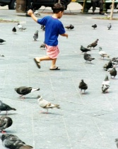 Boy and Pidgeons on the Plaza