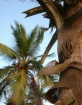 Palms under Sunse...