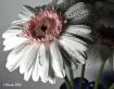 Daisy4783