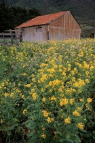 Barn & Flowers 2